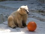 日本平動物園のしろくまくん