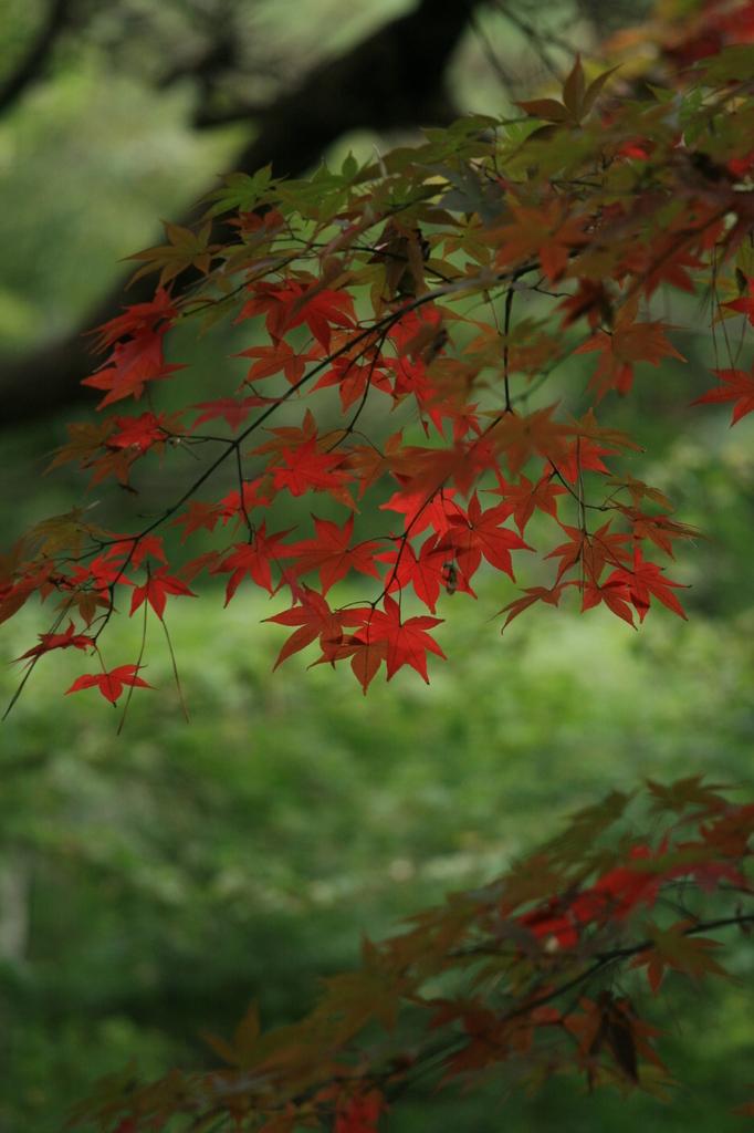 静かなる秋