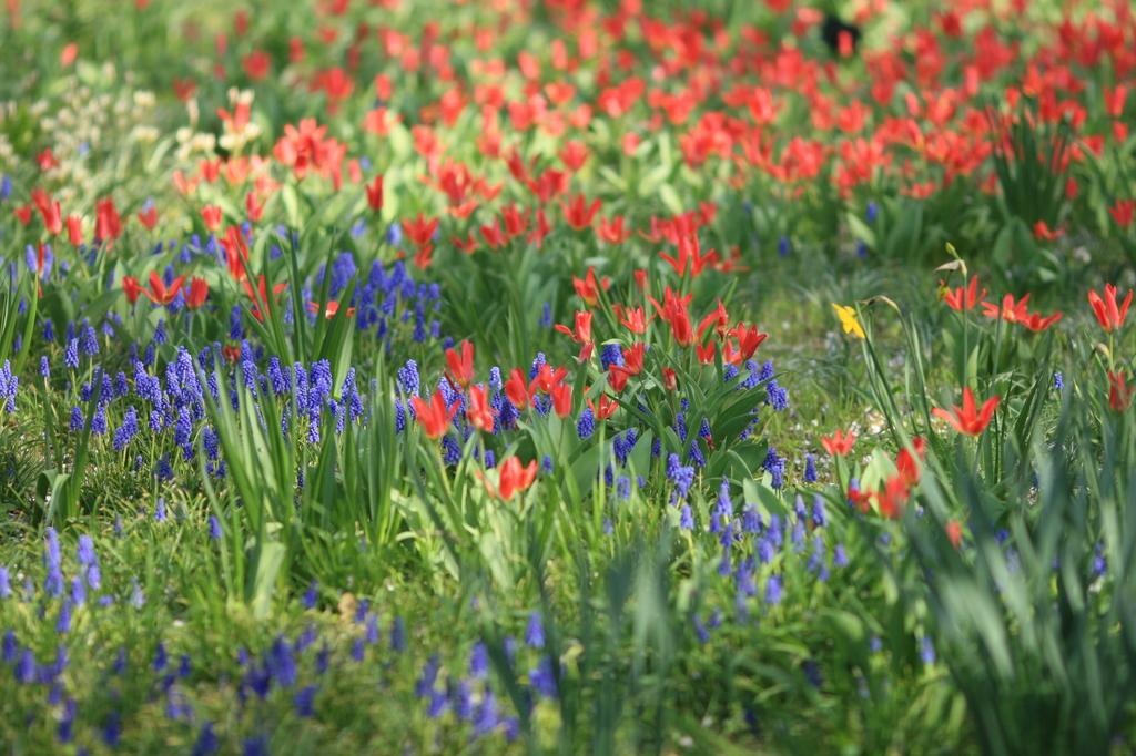 陽だまりの花畑