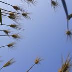 その他のカメラメーカー その他のカメラで撮影した植物(まっすぐ)の写真(画像)