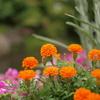 小さな花壇。