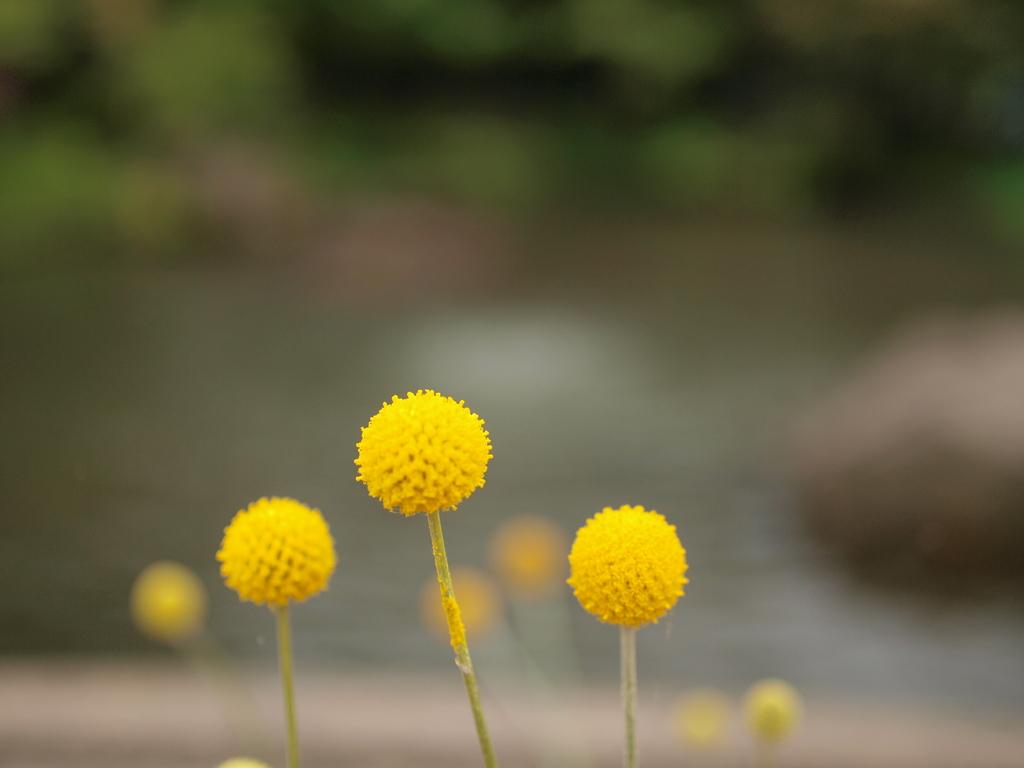 黄色いふわふわ