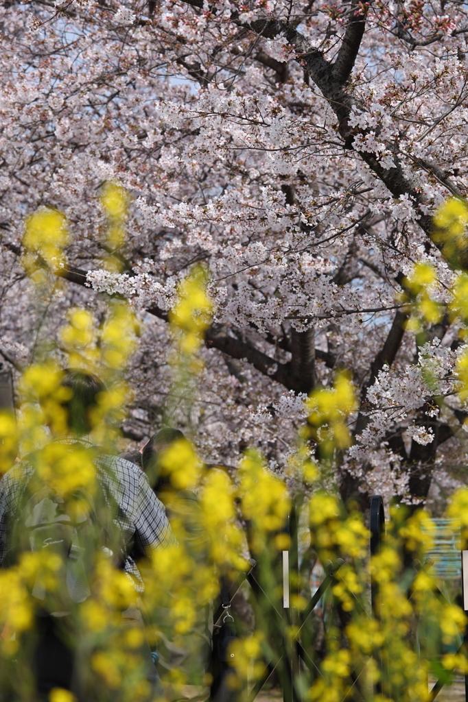 春色につつまれて。