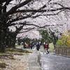 桜舞い散る♪