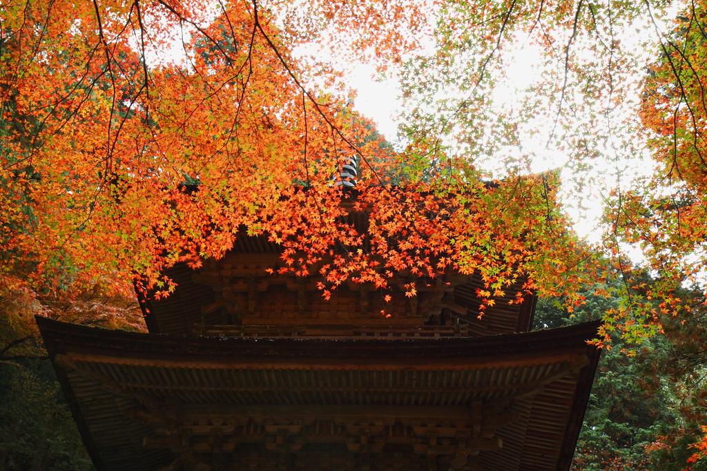 横蔵寺 散策