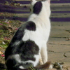 ネコを背負うネコ