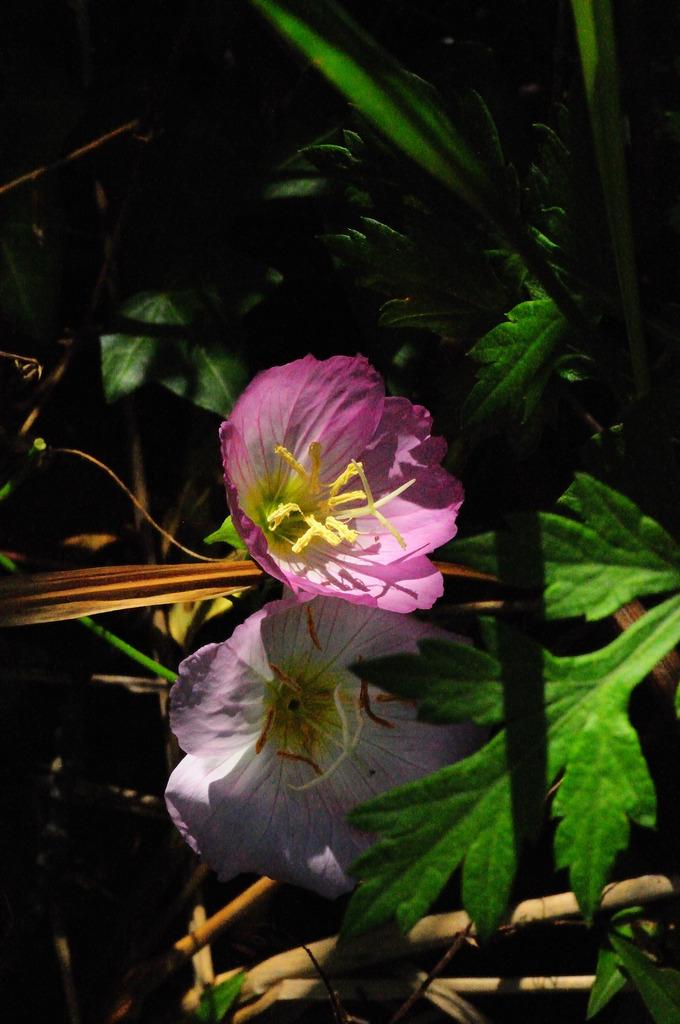 陰日向にひっそり咲く