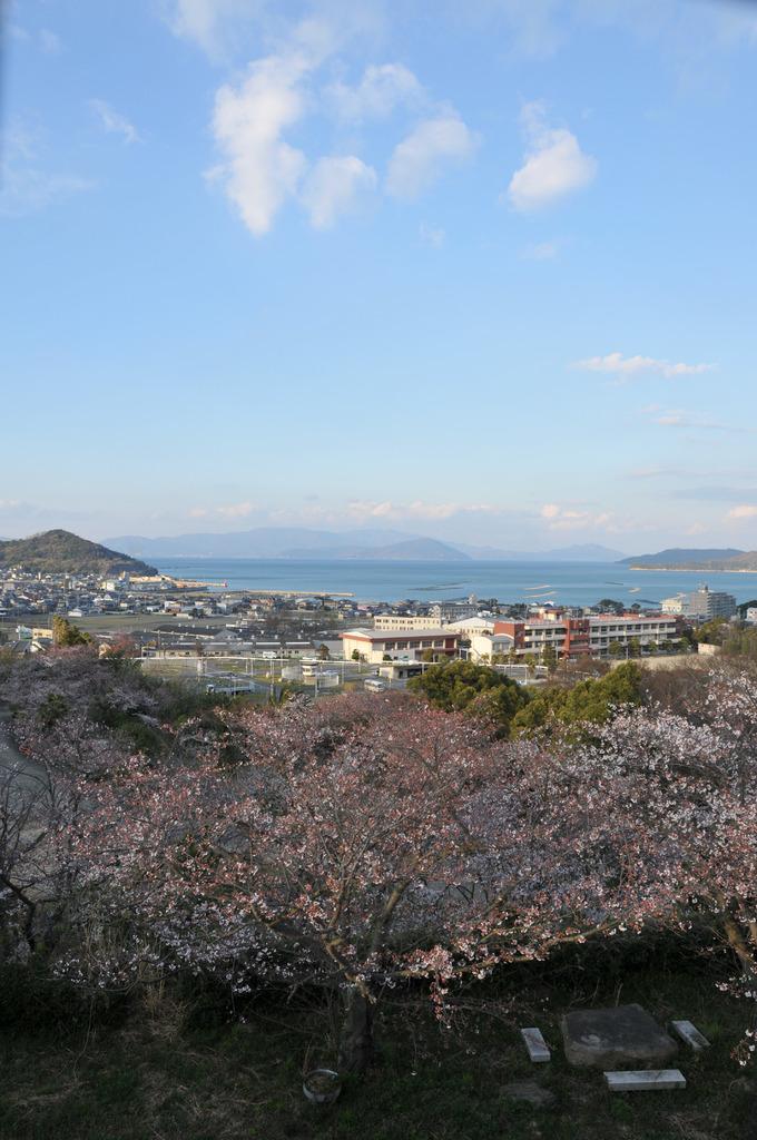瀬戸内海×桜