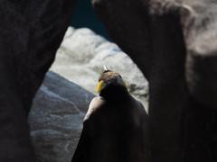 トンネル抜けたらペンギン