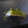 水を得た蛙。