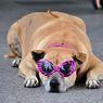 BKK201105-3 Pinky Dog