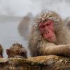 The Snowmonkey⑯子猿たちよ、温泉って最高だろ!