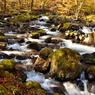 木漏れ日の森駆け巡る沢の水⑤