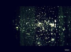 今日の雨。
