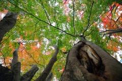 騒めく秋色