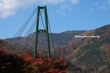 もみじの谷に架かる橋
