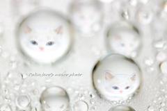 jewelry cat's