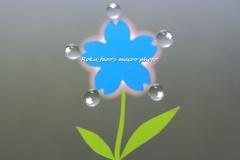 水の花。。。咲く