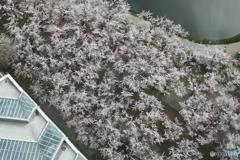 春の空から