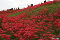 矢勝川河畔初秋風景