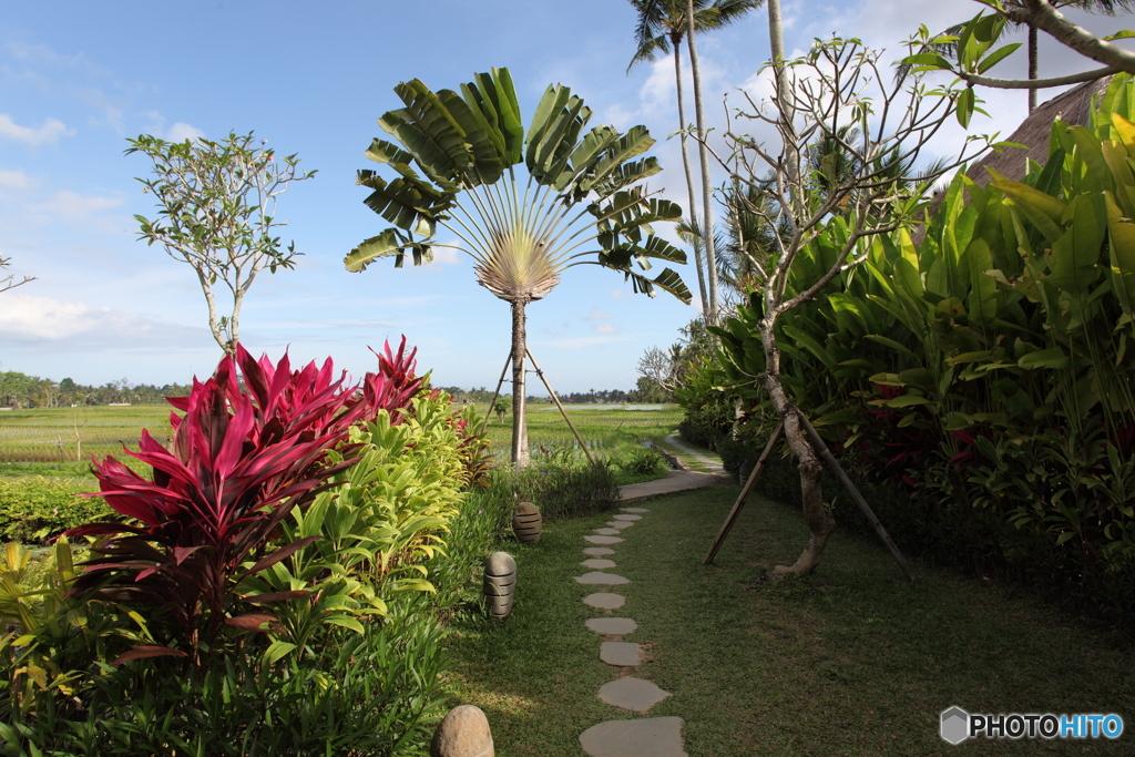 トロピカル・ガーデン