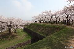 五稜郭の春