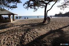 桂浜の午後