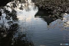 高知城の池