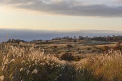 ススキの高原