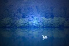 Swan in blue