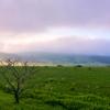 朝霧の恵み