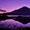 Purple moment