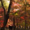 秋色に包まれて歩けば