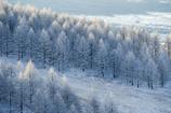 霧ヶ峰の冬5