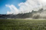 湿原の息吹を
