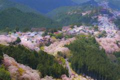 吉野山 春景色