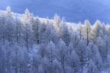 霧ヶ峰の冬4