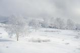 霧ヶ峰の冬2