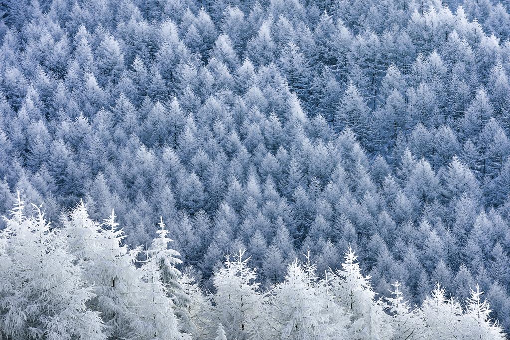 霧ヶ峰の冬1