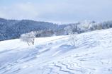 美ヶ原の冬2