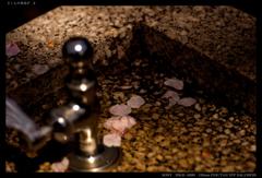 さくらの水浴び 2