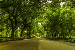 Central Park in the Morning