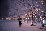 角筈の雪燈り