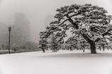 千代田城雪景・外苑の松