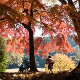 駆け抜ける秋