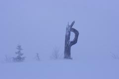 "OK!? ""P""owder snow・・・"