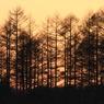 CANON Canon EOS 7Dで撮影した(夕暮れ)の写真(画像)