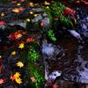 水の流れと秋色