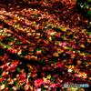 秋の絨毯に差し込む日差し