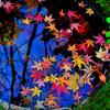 水盆の中の秋